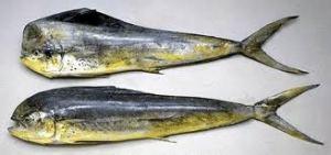 Peixes de Água Salgada - Pesca