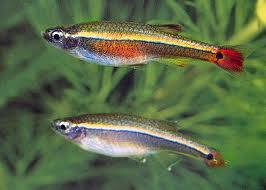 Peixes de Água Doce - Aquário